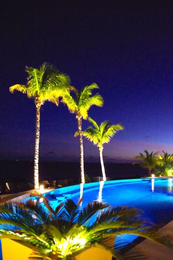 Le Toiny St Barths by Night Beauty In Nature Caribbean Sea Flower Freshness Leaf Light Swimming Nature Night Nightview No People Palm Tree Plant Pool View Poolside Dining Skinnydipping Swimming Pool At Night Travel Destinations Villa Borghese Water