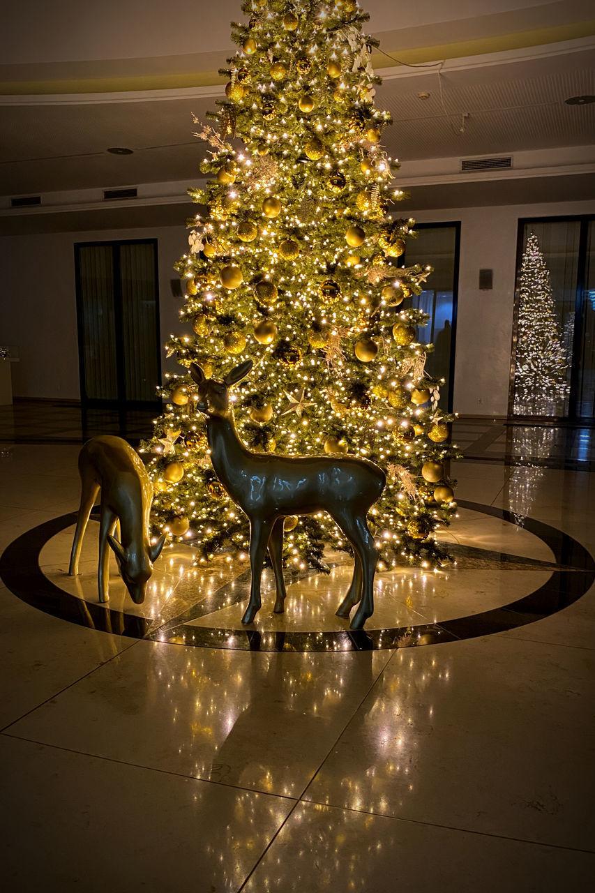 VIEW OF ILLUMINATED CHRISTMAS TREE