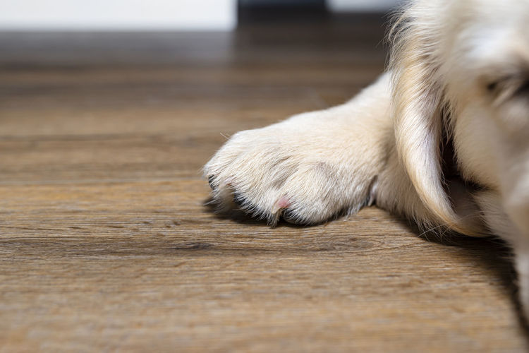 Close-up of a dog on floor