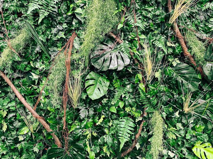 A wall of green leaves, branches, Monstera, Moss and roots. Forest Tropical EyeEm Best Shots - Nature EyeEm Best Shots Plant Green Color Full Frame Growth Backgrounds No People Day Nature High Angle View Beauty In Nature Outdoors Plant Part Tree Leaf Sunlight Land Field Tranquility Grass Branch