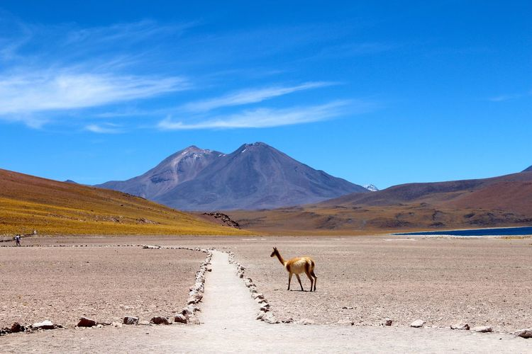 Horses on landscape against blue sky