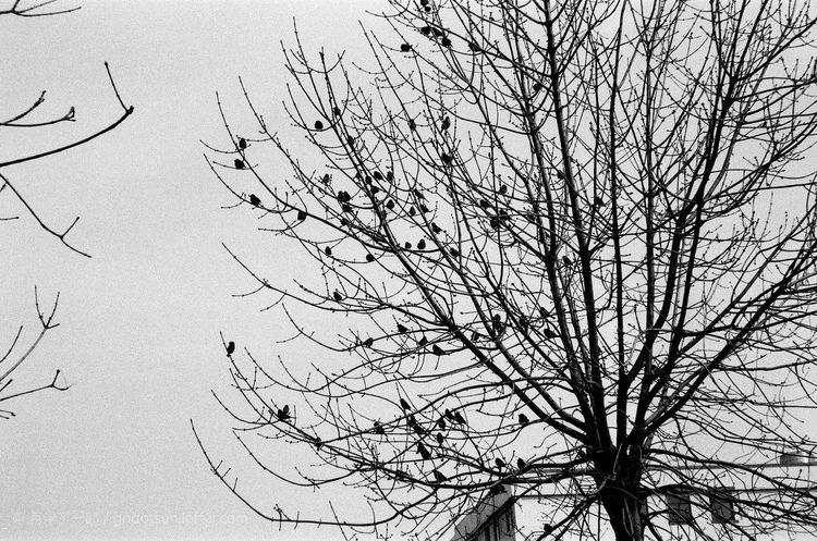 Jinan,china 济南 Ilfordpan100 Ilford Film Blackandwhite Black And White