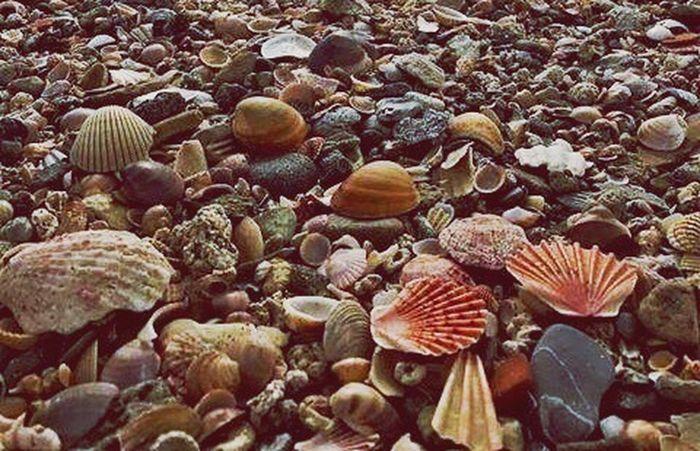Conchiglie Mare Mareggiata Nature Day No People
