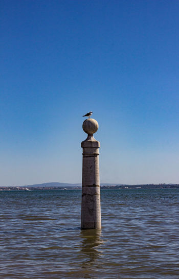 Seagull perching on sea against clear blue sky