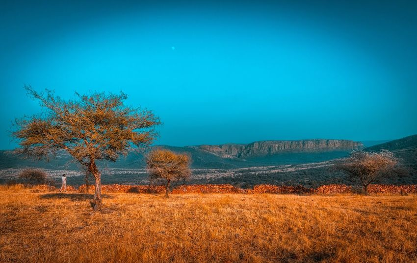 Dreamy landscape Landscape Forest Rajasthan Aravalli Plant Tree Sky Tranquility Beauty In Nature Tranquil Scene Scenics - Nature Blue Mountain Environment No People Landscape Growth Land Nature Copy Space Outdoors Day Non-urban Scene Field
