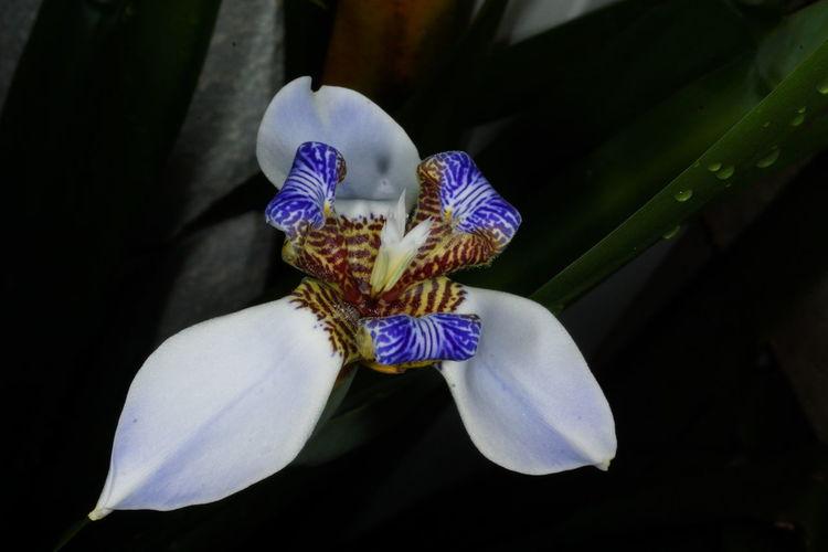 Fleurs Fleurs