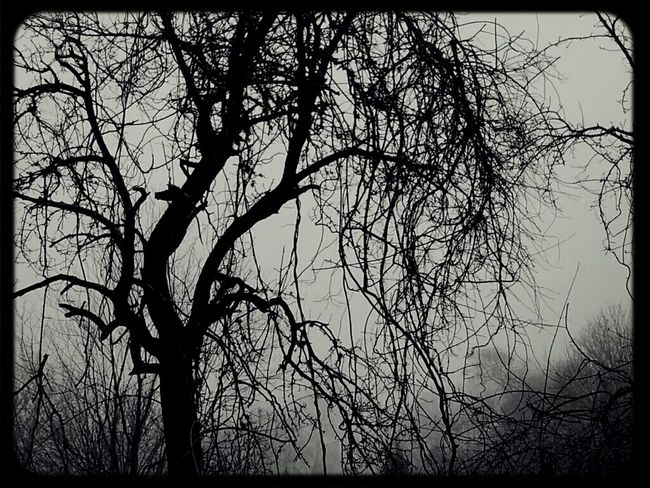 Tree Nature Gloom