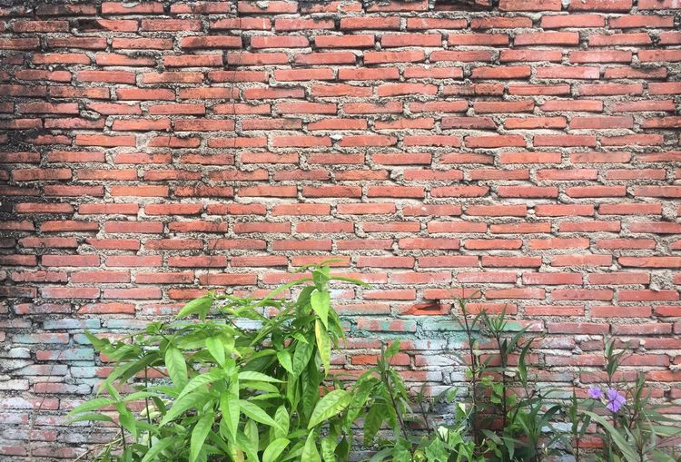 Untidy Brick Wall Brick No People Backgrounds Green Color Pattern Textured  Outdoors Wall - Building Feature Wall