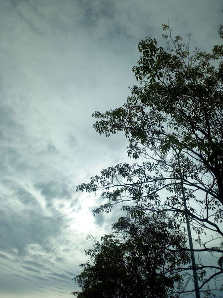 Ranau Sabah Borneo Beauty In Nature EyeEm Selects Selective Focus Plant Life Branches And Sky Bird Tree Flock Of Birds Silhouette Bird Of Prey Flying Sky Cloud - Sky