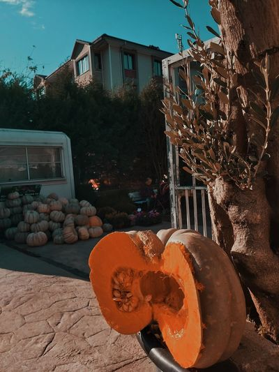 View of pumpkin outside house against building