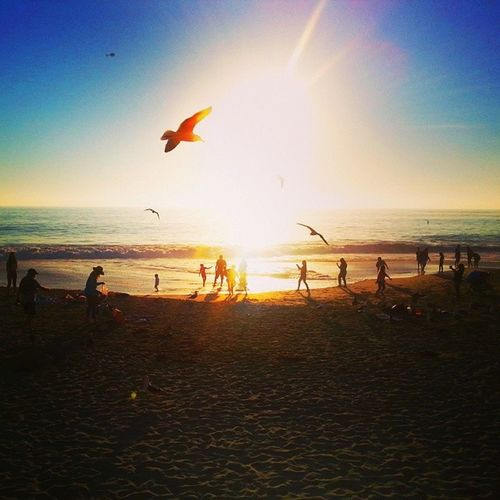 Life is beautiful. Ig Iglagunabeach Igcalifornia Igoc lagunabeach beach beautifulview beautiful birds seagulls playingonthebeach sunset