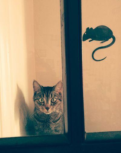 Curious Lilu Animals Cats