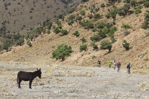 Amazighen Atlas Mountain Beauty In Nature Bereber Bike Cicling Domestic Animals Landscape Lifestyles Livestock Mammal Marocco Mountain MTB Nature