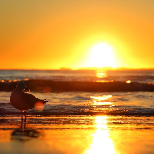 43 Golden Moments Bird Animals Beach Sunrise Water Australia Queensland Beachphotography Landscape Landscape_Collection Golden Golden Hour EyeEm Best Shots First Eyeem Photo
