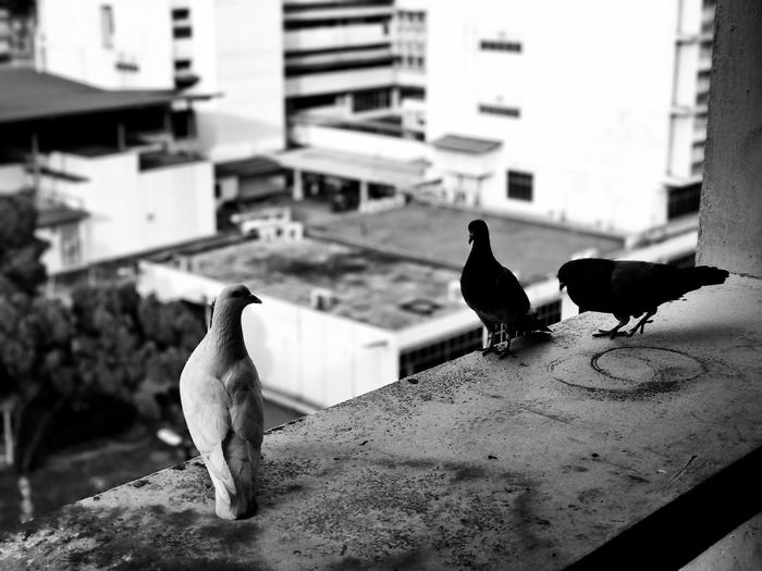 Pigeons Bird Pigeon Building Exterior Architecture Animals In The Wild Nature Hospital First Eyeem Photo
