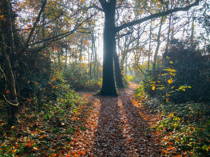 Morning light in the autumn Tree Forest Autumn Plant Land Nature Tranquility WoodLand Beauty In Nature Change Tranquil Scene Scenics - Nature Day Plant Part Non-urban Scene Growth Leaf Tree Trunk Trunk No People Outdoors Trail