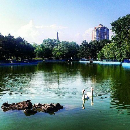 одесса Природа паркпобеды красота птицы лебеди лето