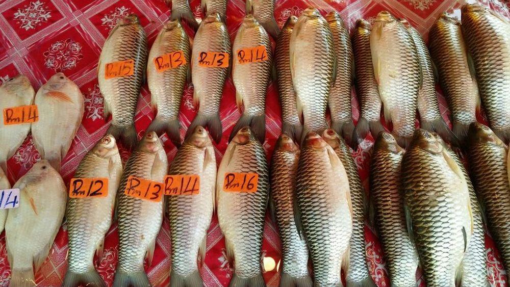 Fresh water fishes. Taking Photos Tamu Nightmarket Fish Market