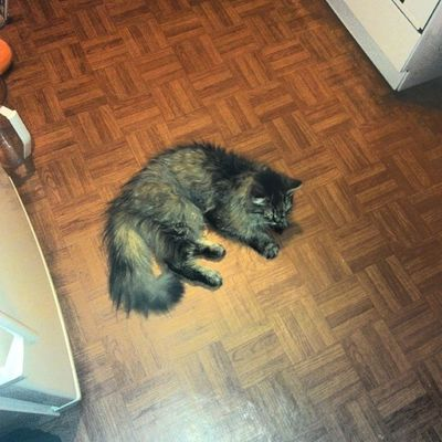 #cat #cats #catoftheday #instacats #catsofinstagram #we_love_cats #catsagram #caturday #кот #котэ #2014 Cat Cats котэ Caturday Catsofinstagram Catsagram Catoftheday 2014 кот Instacats We_love_cats