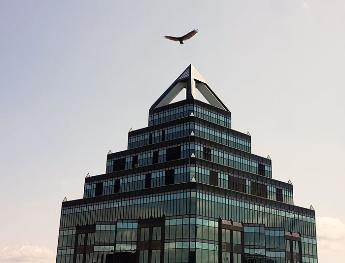 Low angle view of bird flying over building against sky