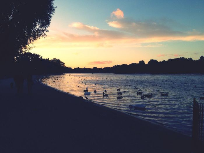 Sunset London hyde park