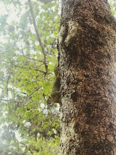 Part of nature Tree Nature Day Low Angle View No People Forest Tree Trunk Outdoors Beauty In Nature Branch Close-up Animals In The Wild First Eyeem Photo