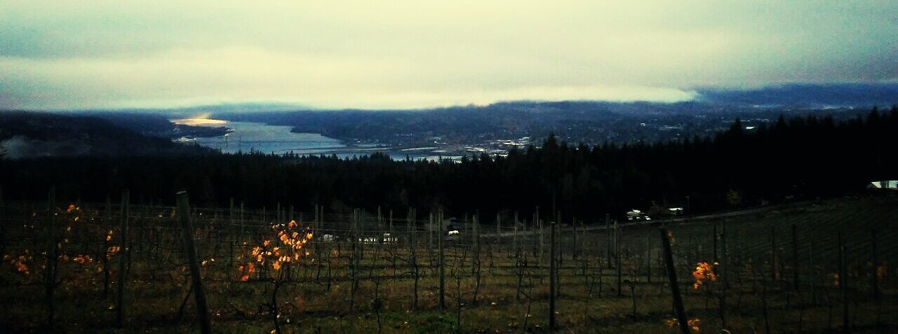 Hood River, Oregon View Sunset Landscape Outdoors No People Sky Nature Environment Tree Beauty In Nature Columbia River Gorge White Salmon Washington Water Dramatic Sky Pacific Northwest  Beautiful ♥ Remote Hello World Farmland Taking Photos Missing You Grass Green Blue