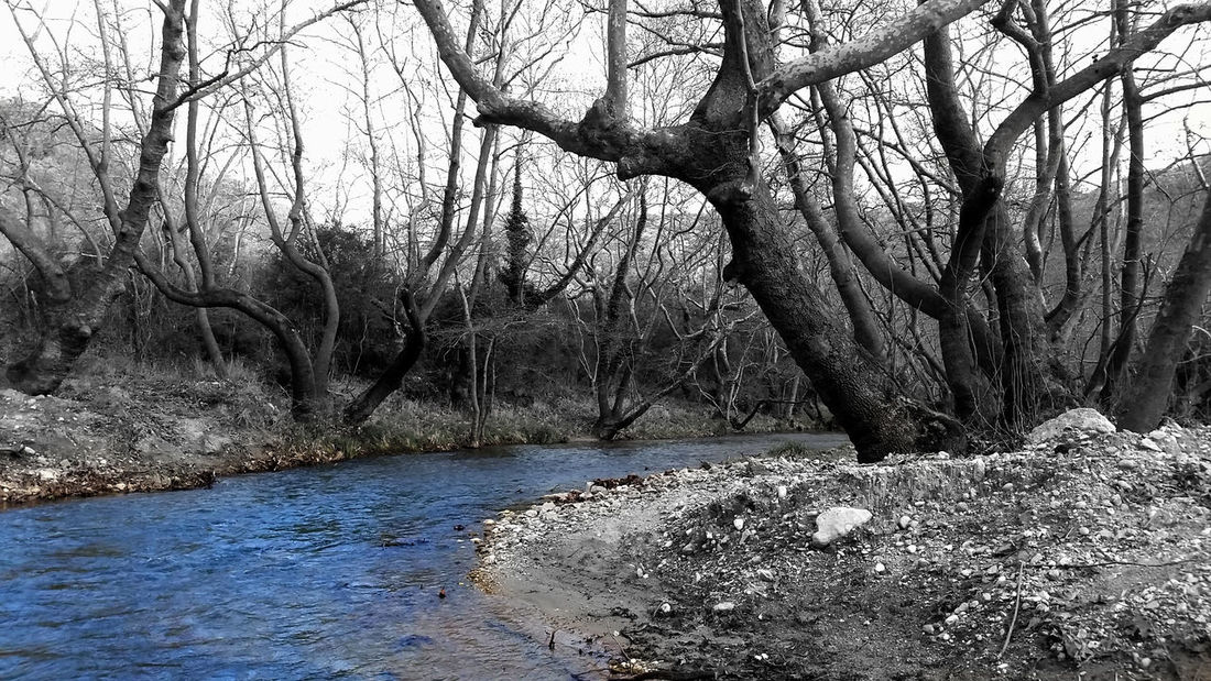 By The River Monochrome Blue Water Blue River Spring Coming Soon Landscape_photography OpenEdit Beautiful Nature Tree Silhouette Nature_collection Nature_ Collection  River View Riverscape Tree_collection