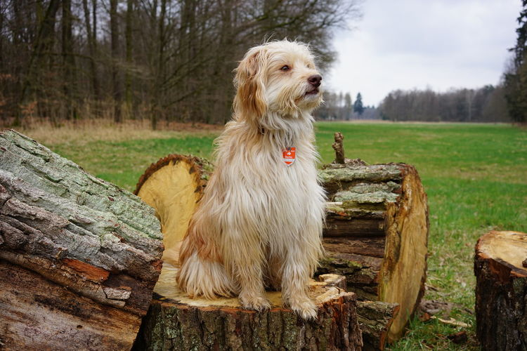 View of a dog on tree stump