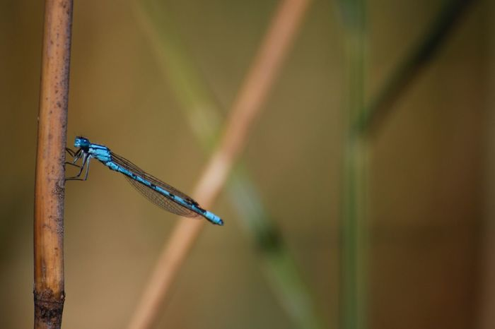 A Dragon in our Nature One Animal Animals In The Wild Dragonfly Nature Swiss Photographer Swiss Nature