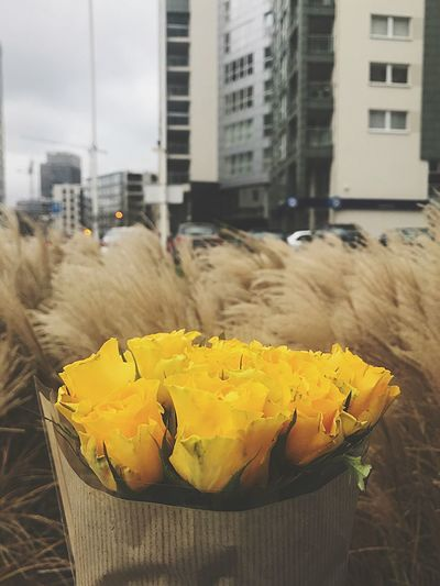 City Built Structure Building Exterior Yellow Architecture Focus On Foreground No People Nature Outdoors Transportation Building Container Healthy Eating Mode Of Transportation Flowering Plant Street Day Flower Close-up Freshness