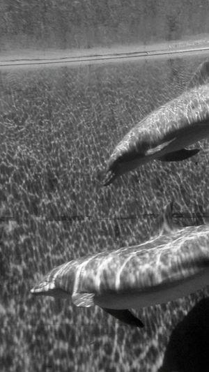 Shades Of Grey Summer Views Dolphines Precious Moments Of Life Genova Aquarium Serenity EyeEm Animal Lover EyeEm Gallery Eyeem Photography Sommergefühle