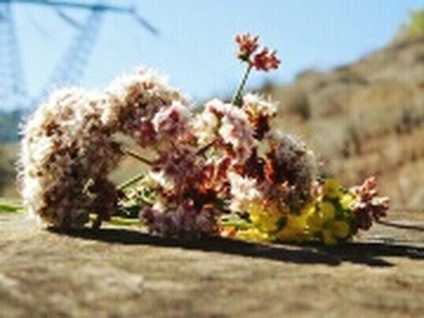 Walking Around Taking Photos Fatherdaughter Nature Flowers, Nature And Beauty California Missing You