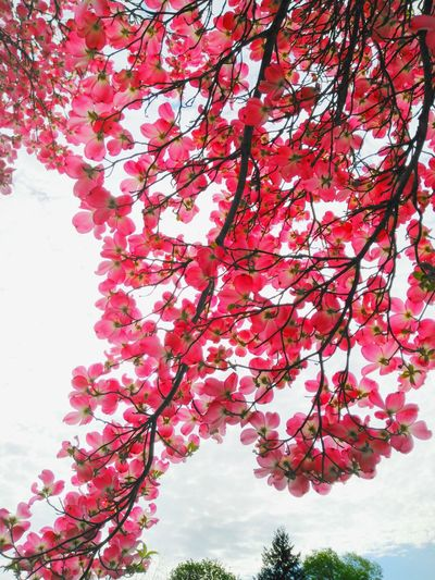A little piece of heaven. Pink Flower Pink Trees Pink Tree Beautiful Flowers
