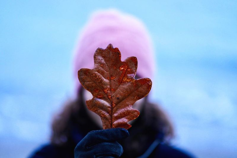 A walk on the beach by the forest Winter Is Coming Aarhus Denmark Cold Temperature Cold Autumn Leaves Autumn Ocean Beach By The Forest Human Hand Close-up Hand Human Body Part Nature Focus On Foreground Growth Beauty In Nature Outdoors Leaf Blue First Eyeem Photo