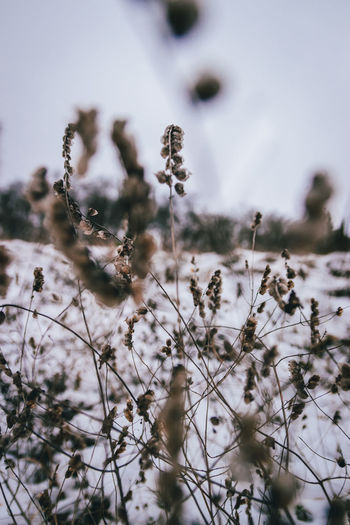 Winter Winter Snow Cold Temperature Nature Beauty In Nature No People Outdoors Growth Close-up Day Tree Needle - Plant Part Adventure Plant Vscofilm Winter Landscape Nature Beauty In Nature Forest Taking Photos Farbrausch Mikadign