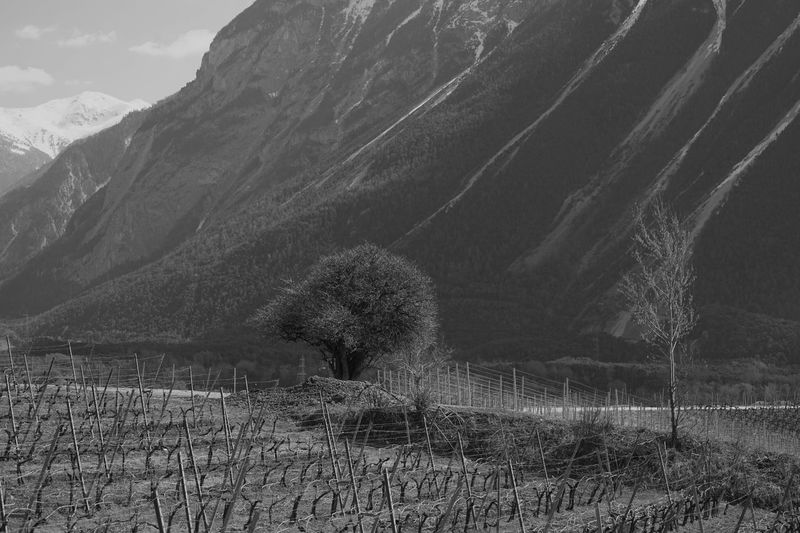 Black & White Black And White Blackandwhite Salgesch Wallis Nature Beauty In Nature Growth Mountain Scenics Outdoors Landscape No People Tranquility Day Sky