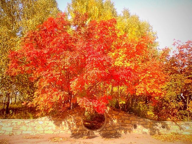 Beautiful Tree Autumn Beautiful Autumn