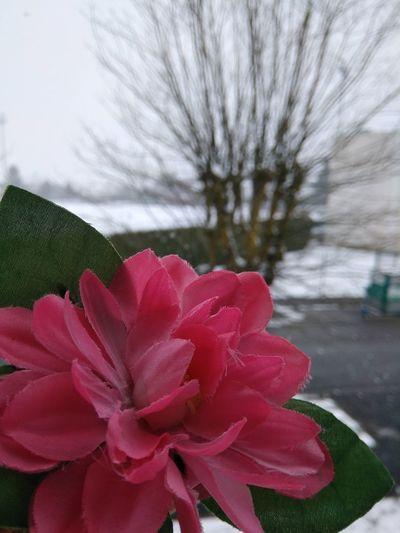Fausse Fleur Neige Flou