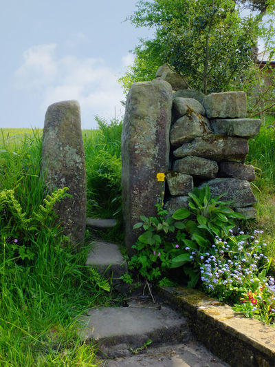traditional stone gate or stile in a dry stone wall with flowers and ferns in front of a spring green meadow in west yorkshire dales countryside Dry Stone Wall Gate Nature Yorkshire Architecture Beauty In Nature Cloud - Sky Day Grass Green Color Growth History Nature No People Outdoors Plant Sky Solid Stile Stone Stone - Object Stone Material Stone Wall Tranquility Tree