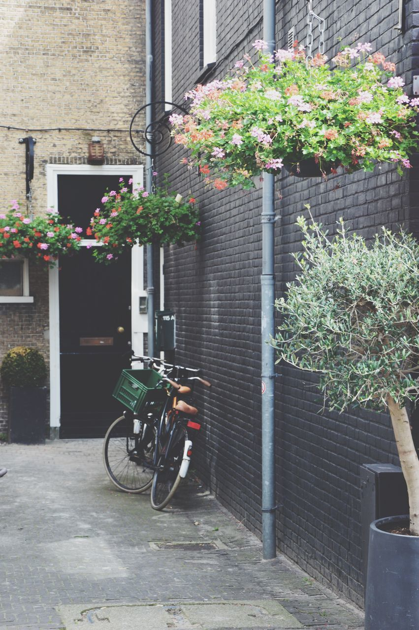 bicycle, architecture, plant, building exterior, outdoors, growth, built structure, day, city, flower, no people