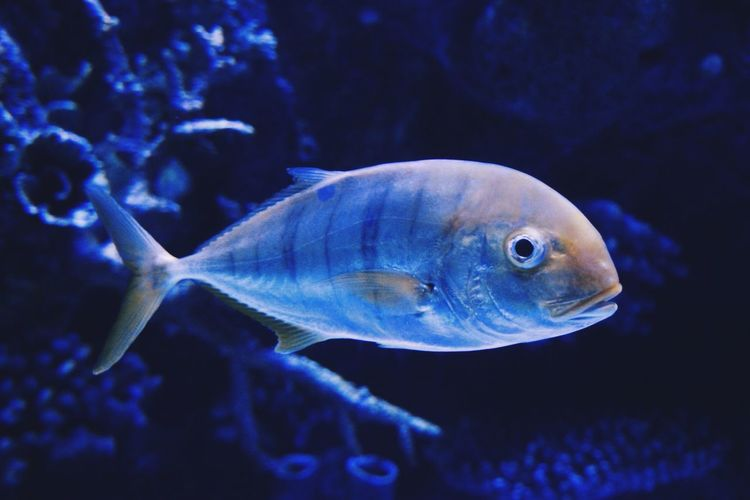 #fish #fish
