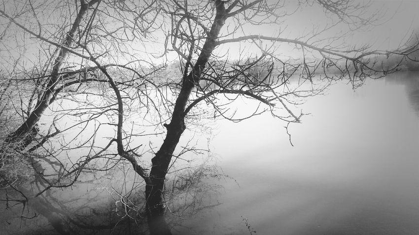Blackandwhite Loire Tree