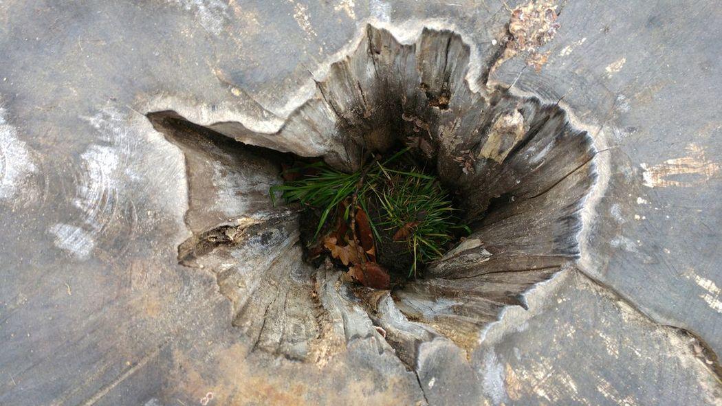 No People No Filter The Purist (no Edit, No Filter) Tree Baumstamm Baum Baumstumpf First Eyeem Photo Autumn Herbst Grass