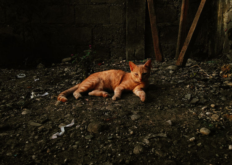 High angle view of cat lying on field