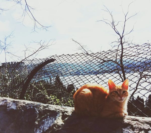 Cat Nature Beauty In Nature Istanbul Turkey Cats Of EyeEm