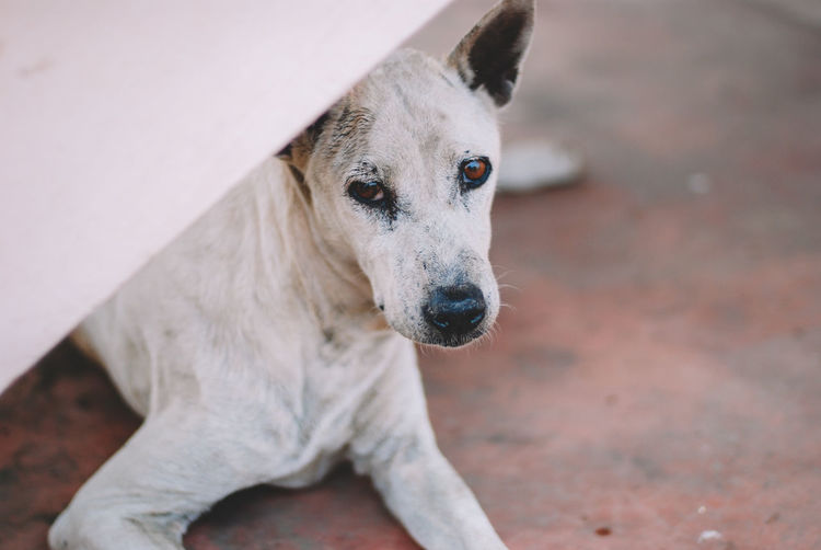 One Animal Animal Themes Animal Mammal Domestic Domestic Animals Canine Dog Pets Vertebrate Portrait No People Looking Away Focus On Foreground Looking Day High Angle View Close-up Standing Animal Head