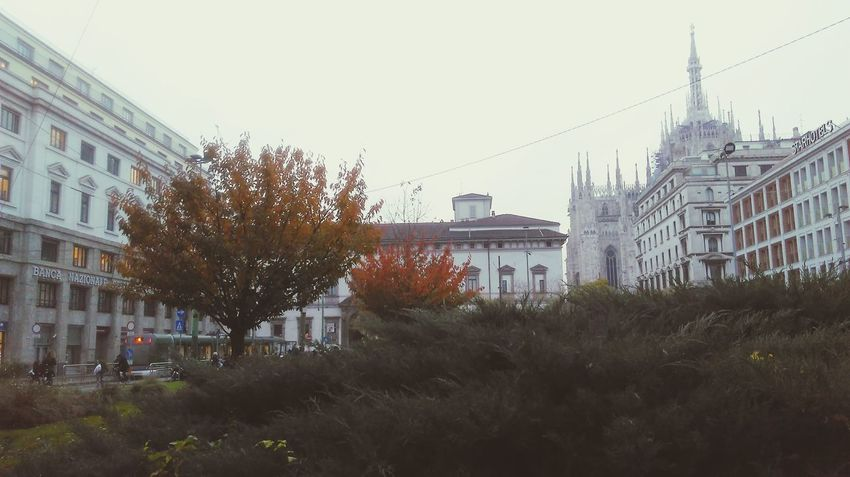 Building Exterior Built Structure City Tree Architecture Sky No People Outdoors Social Issues Clear Sky Bare Tree Day Nature University Milan Point Of View Milan,Italy Dome History Places Milano Architecture