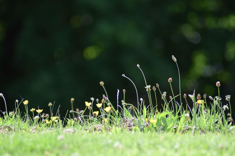 Plant growing on grassy field