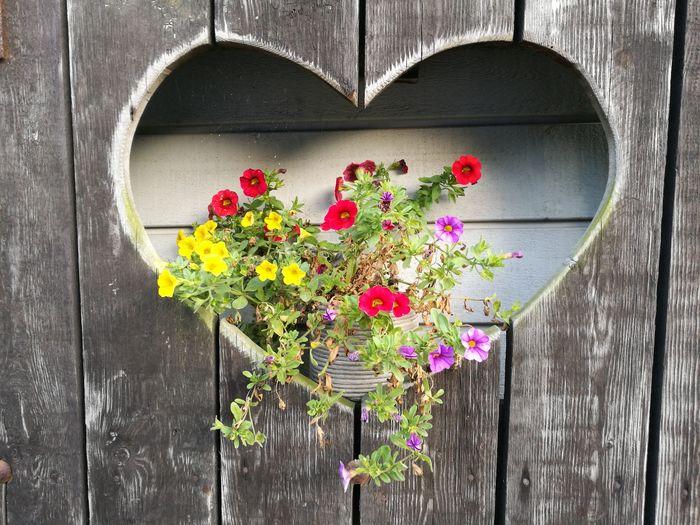 Flowers Amidst Heart Shape Wooden Wall